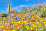 Blooming Desert Photographic Print by Anton Foltin