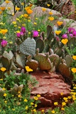 Wildfowers and Cactus Blooms. Posters by  farflungfotos