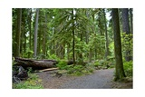 Olympic Peninsula Rainforest Affiches par  duallogic