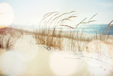 Dune Grasses on the Beach Photographic Print by  soupstock