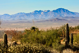 Arizona Sonora Desert Museum Vista Photographic Print by  NSirlin