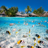 Beautiful Tropical Island in French Polynesia under and above Water Photographic Print by BlueOrange Studio