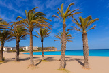 Javea Playa Del Arenal Beach in Mediterranean Alicante at Xabia Spain Palm Trees Photographic Print by  holbox