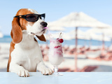 Cute Dog in Sunglasses Drink Cocktail Photographic Print by  igorr