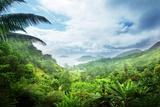 Jungle of Seychelles Island Photographic Print by Iakov Kalinin