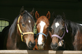 Horses in the Barn Door Photographic Print by  accept