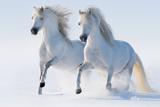 Two Galloping Snow-White Horses Photo by Abramova Kseniya