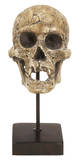 Mosely Skull Home Accessories