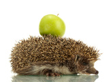 Hedgehog with Apple, Isolated on White Posters by  Yastremska
