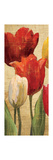 Tulip Fantasy on Cream II Giclee Print by Marilyn Hageman