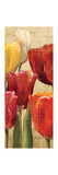 Tulip Fantasy on Cream III Premium Giclee Print by Marilyn Hageman