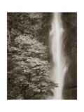 Multnomah Falls Giclee Print by Alan Majchrowicz