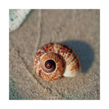 Sand Surf Shell Posters