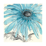 Gerbera Blue III Giclee Print by Chris Paschke