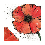 Not a California Poppy on White IV Print by Chris Paschke