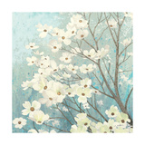 Dogwood Blossoms I Prints by James Wiens