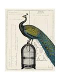 Peacock Birdcage II Posters