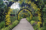 Botanical Garden in Singapore Photographic Print by Yury Zap