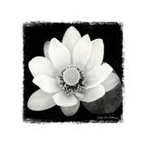 Lotus Flower II Poster von Debra Van Swearingen