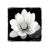Lotus Flower II Posters by Debra Van Swearingen