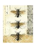Golden Bees n Butterflies No 1 Prints by Katie Pertiet