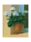 Creancey Geraniums I Poster