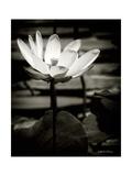 Lotus Flower VIII Kunstdrucke von Debra Van Swearingen