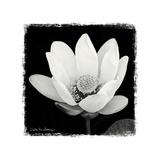 Lotus Flower I Kunst von Debra Van Swearingen