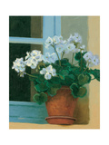 Creancey Geraniums II Prints
