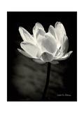 Lotus Flower X Reproduction giclée Premium par Debra Van Swearingen