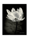 Lotus Flower X Poster von Debra Van Swearingen