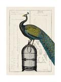 Peacock Birdcage II Posters by Hugo Wild