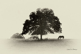 Horses and Trees I Fotodruck von Debra Van Swearingen