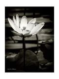 Lotus Flower VIII Kunst von Debra Van Swearingen