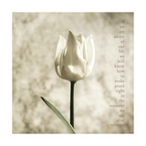 A Single Tulip Giclee Print by Deborah Schenck
