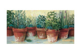 Potted Herbs II Print by Carol Rowan