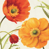 Poppies Melody II Poster por Lisa Audit