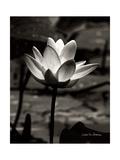 Lotus Flower VII Poster von Debra Van Swearingen