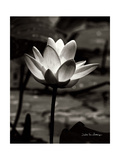Lotus Flower VII Posters by Debra Van Swearingen
