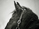 Snow Daze IV Crop Photographic Print by Lisa Cueman