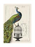 Påfugl på bur I Kunst af Hugo Wild
