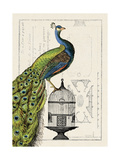 Peacock Birdcage I Art by Hugo Wild