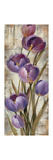 Royal Purple Tulips II Crop Premium Giclee Print