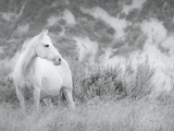 Misty Mare Crop Photographic Print by Lisa Cueman