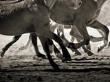 Off to the Races Crop Photographie par Lisa Cueman