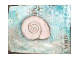 Seashell II Giclee Print by Cassandra Cushman