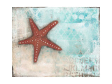 Starfish Prints by Cassandra Cushman