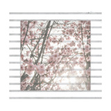 Cherry Blossom Stripe Giclee Print by Ashley Hutchins
