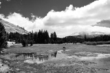 Tuolomne Meadows Monochrome Photographic Print by Marc Gutierrez