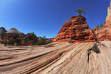 The Famous Jumping Tree Jerky Tree. Picturesque Striped Hills from Sandstone and Low Pines Photographic Print by  kavram